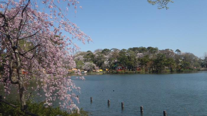大田区ホームページ:洗足池公園